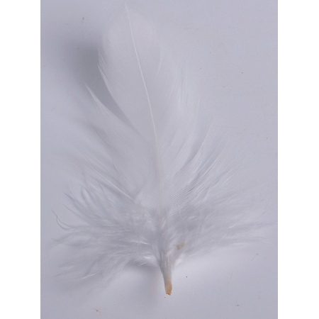 2 gr of small withe feathers